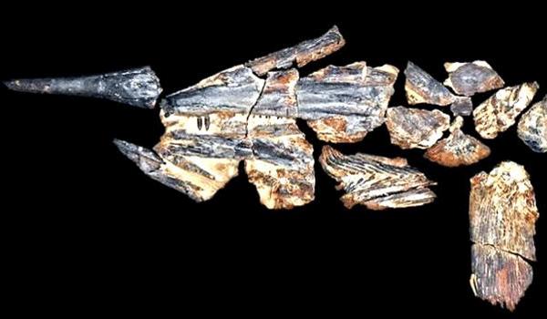 mediawarta-fosil-ikan-pedang